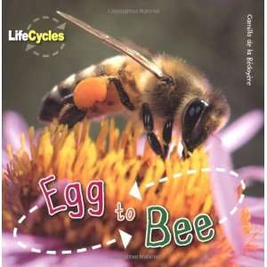 to Bee (Qed Life Cycles) (9781848355798): Camilla De Bedoyere: Books