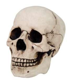 HOMOSAPIENS SKULL STATUE FIGURINE HUMAN SHAPED SKELETON HEAD HALLOWEEN