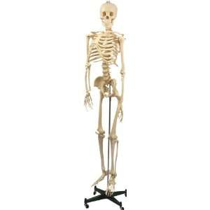 Plastic Skeleton 33.25 High Arts, Crafts & Sewing