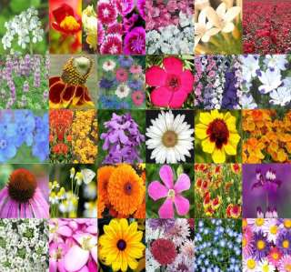 POUND LB Perennial Wildflower mix 100% seed SEEDS~!