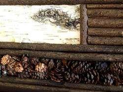 Pinecone Birch Bark Twig Mirror Adirondack Pine Cone Branch Log Cabin