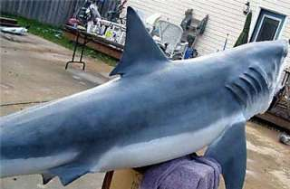Withe shark http dsc discovery com sharks great white sharks images